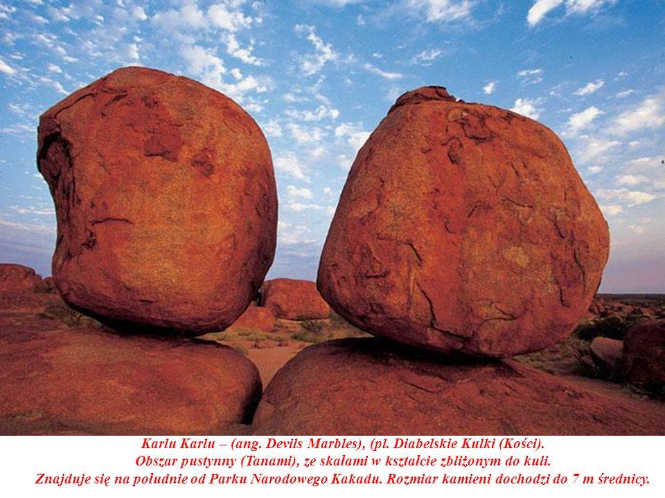 Park zamieszkuje kilka gatunków kangurów i spokrewnionych z nimi torbaczy walaby.