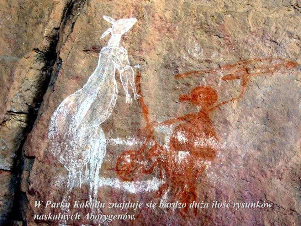 Rdzenni mieszkańcy Australii to Aborygeni. Prowadzili koczowniczy tryb życia. Byli uzależnieni od otaczającego ich środowiska i bardzo z nim związani.