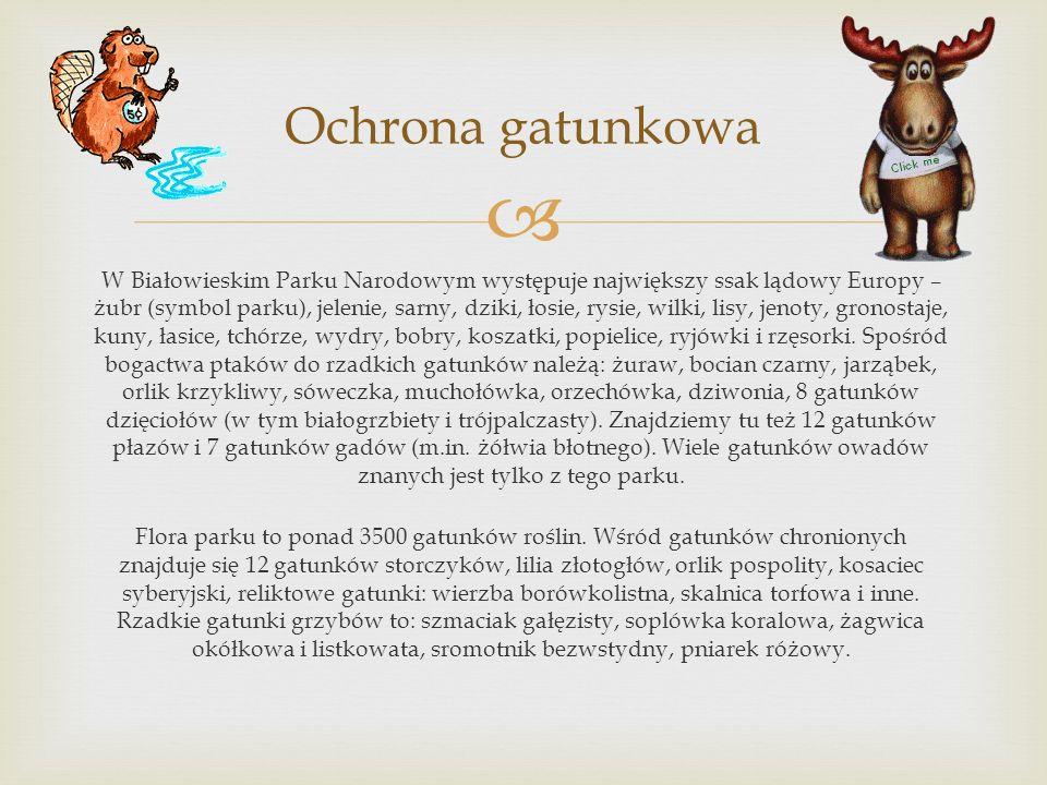 W Białowieskim Parku Narodowym występuje największy ssak lądowy Europy – żubr (symbol parku), jelenie, sarny, dziki, łosie, rysie, wilki, lisy, jenoty, gronostaje, kuny, łasice, tchórze, wydry, bobry, koszatki, popielice, ryjówki i rzęsorki.