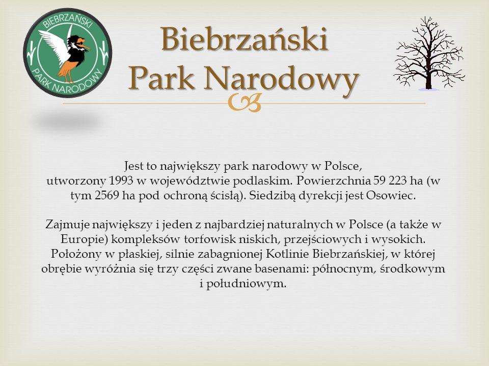 W Białowieskim Parku Narodowym występuje największy ssak lądowy Europy – żubr (symbol parku), jelenie, sarny, dziki, łosie, rysie, wilki, lisy, jenoty