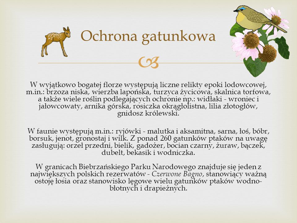W wyjątkowo bogatej florze występują liczne relikty epoki lodowcowej, m.in.: brzoza niska, wierzba lapońska, turzyca życicowa, skalnica torfowa, a także wiele roślin podlegających ochronie np.: widłaki - wroniec i jałowcowaty, arnika górska, rosiczka okrągłolistna, lilia złotogłów, gnidosz królewski.
