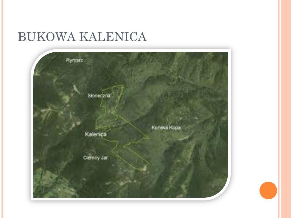 BUKOWA KALENICA