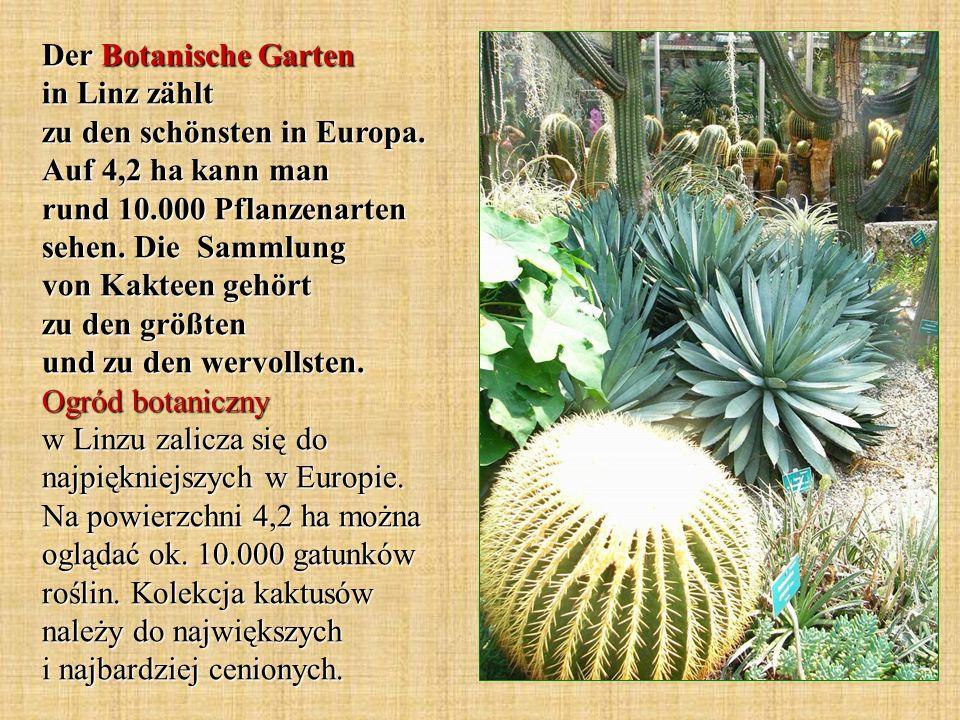 Der Botanische Garten in Linz zählt zu den schönsten in Europa. Auf 4,2 ha kann man rund 10.000 Pflanzenarten sehen. Die Sammlung von Kakteen gehört z