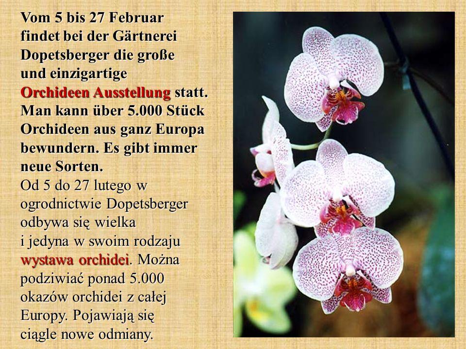 Vom 5 bis 27 Februar findet bei der Gärtnerei Dopetsberger die große und einzigartige Orchideen Ausstellung statt. Man kann über 5.000 Stück Orchideen