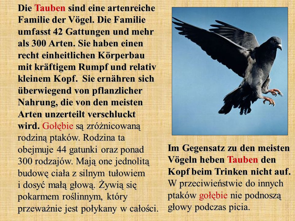 Die Tauben sind eine artenreiche Familie der Vögel.