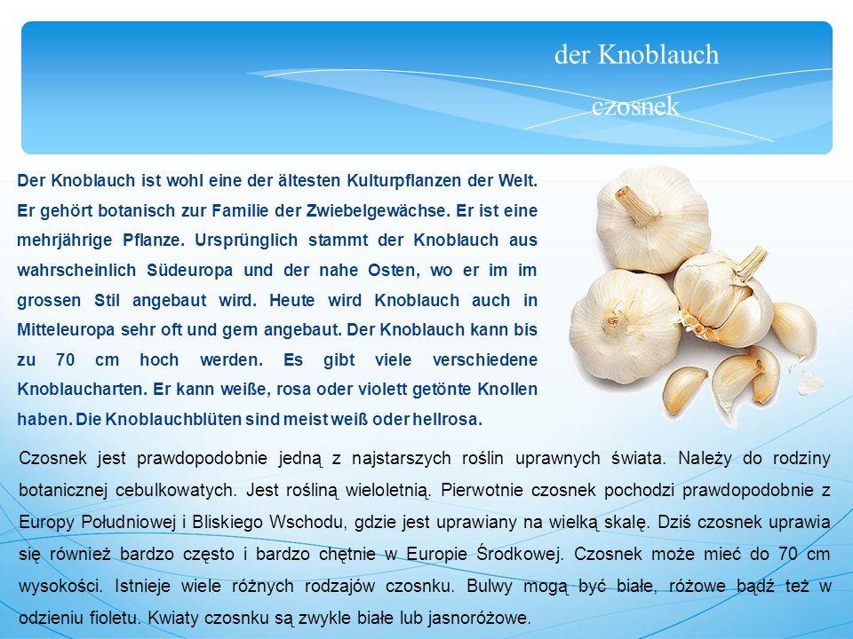 der Knoblauch czosnek Der Knoblauch ist wohl eine der ältesten Kulturpflanzen der Welt.