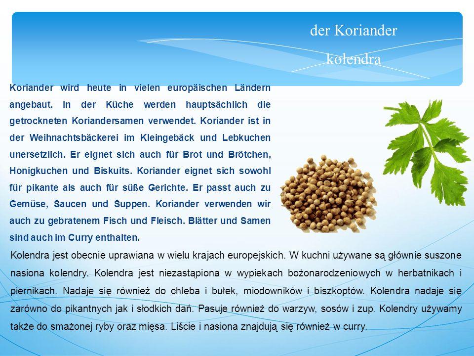 der Koriander kolendra Koriander wird heute in vielen europäischen Ländern angebaut.