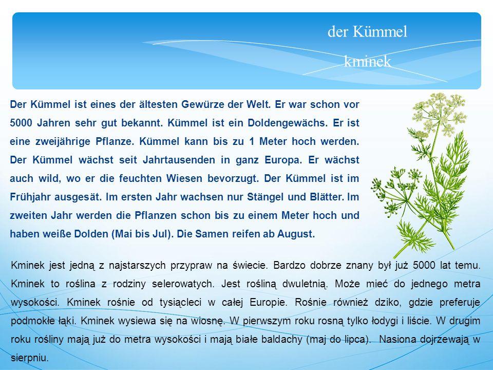 der Kümmel kminek Der Kümmel ist eines der ältesten Gewürze der Welt.