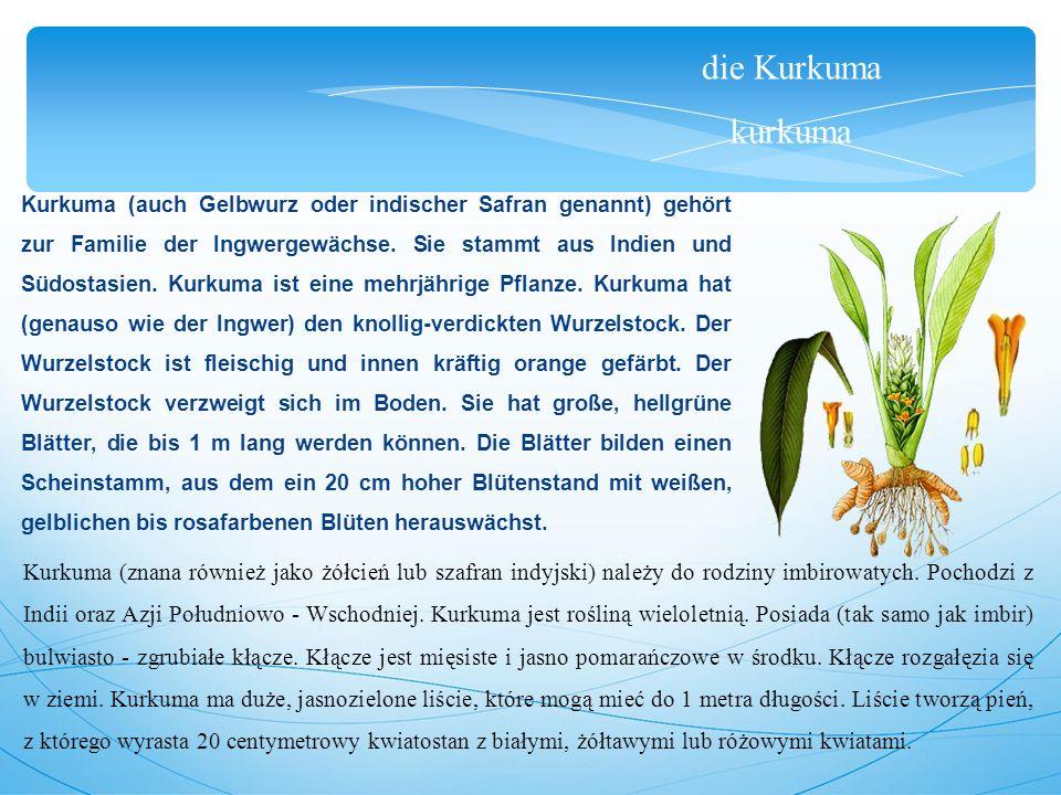 die Kurkuma kurkuma Kurkuma (auch Gelbwurz oder indischer Safran genannt) gehört zur Familie der Ingwergewächse.