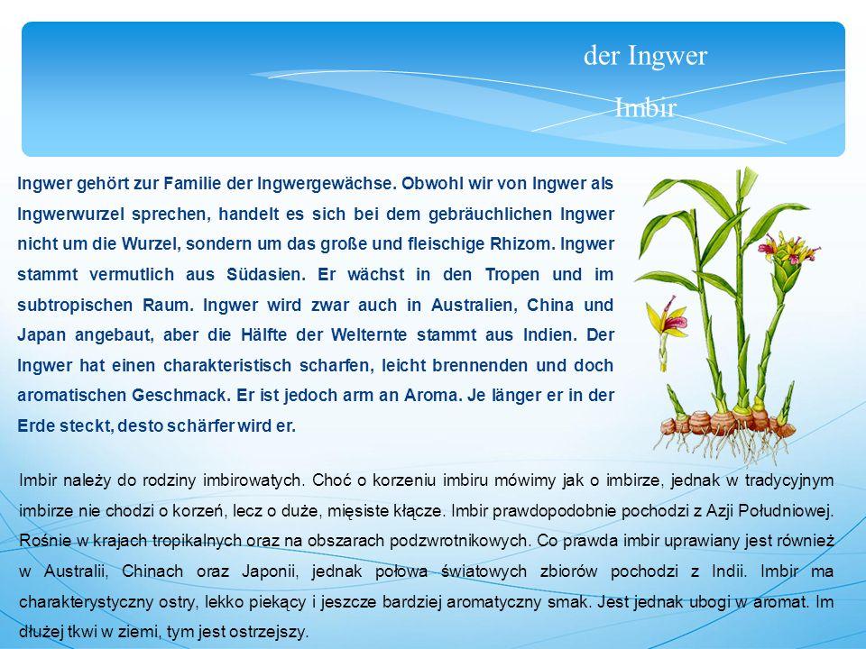 der Ingwer Imbir Ingwer gehört zur Familie der Ingwergewächse.