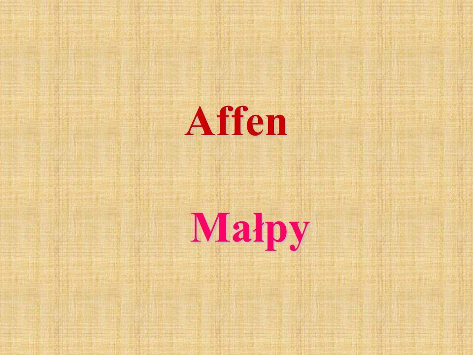 Affen Małpy