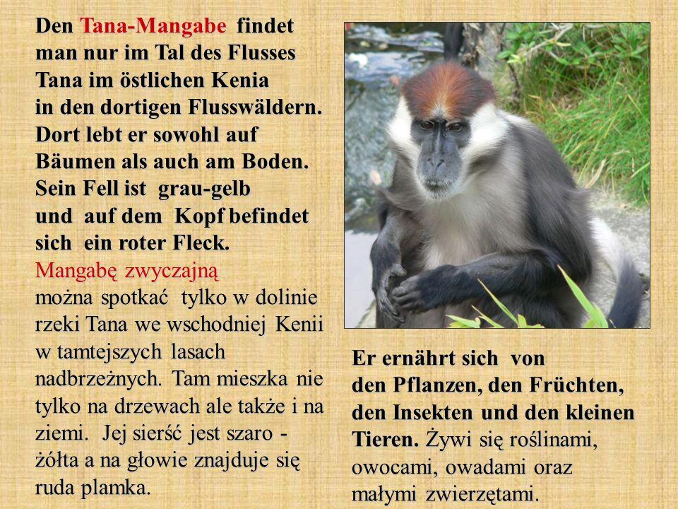 Den Tana-Mangabe findet man nur im Tal des Flusses Tana im östlichen Kenia in den dortigen Flusswäldern. Dort lebt er sowohl auf Bäumen als auch am Bo