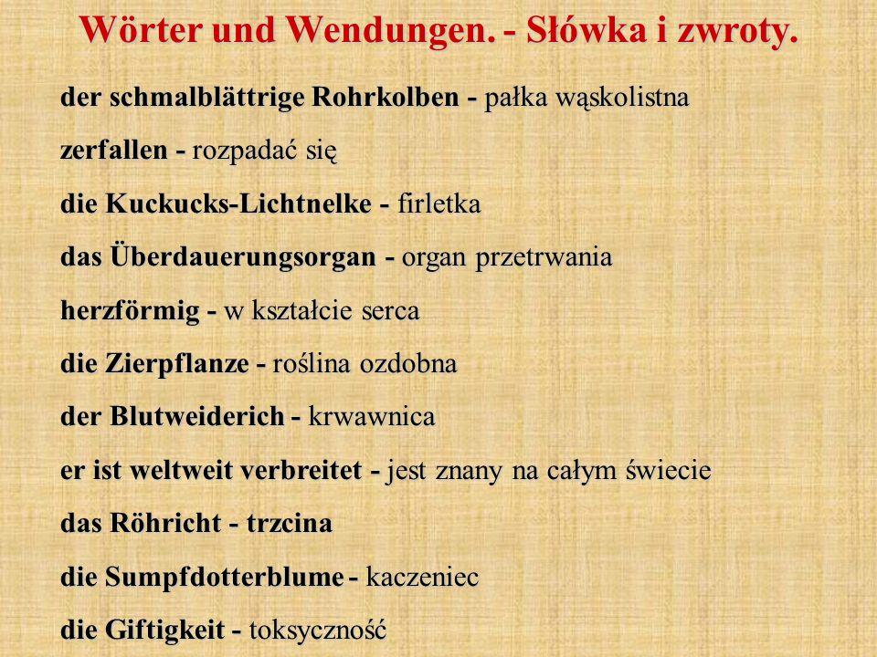 Wörter und Wendungen. - Słówka i zwroty. der schmalblättrige Rohrkolben - pałka wąskolistna zerfallen - rozpadać się die Kuckucks-Lichtnelke - firletk
