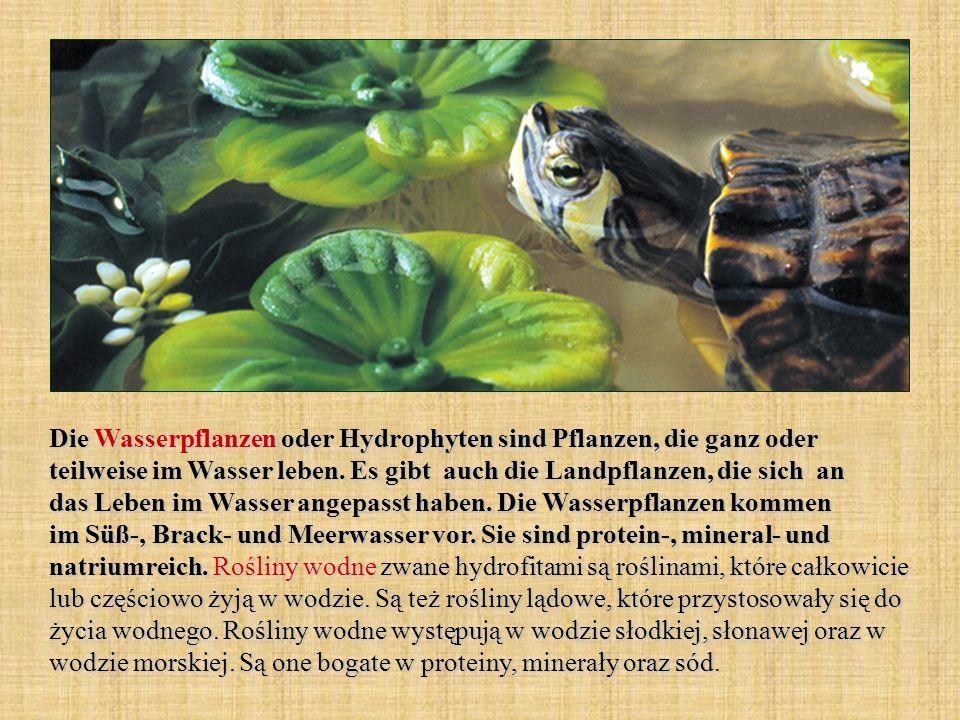 Die Wasserpflanzen oder Hydrophyten sind Pflanzen, die ganz oder teilweise im Wasser leben. Es gibt auch die Landpflanzen, die sich an das Leben im Wa