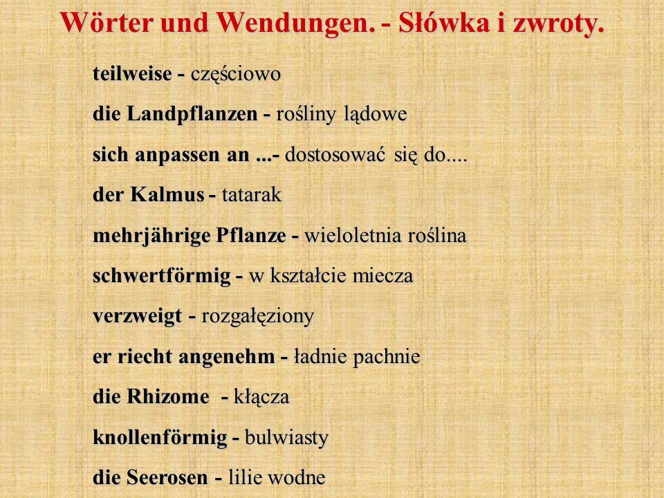 Wörter und Wendungen. - Słówka i zwroty. teilweise - częściowo die Landpflanzen - rośliny lądowe sich anpassen an...- dostosować się do.... der Kalmus