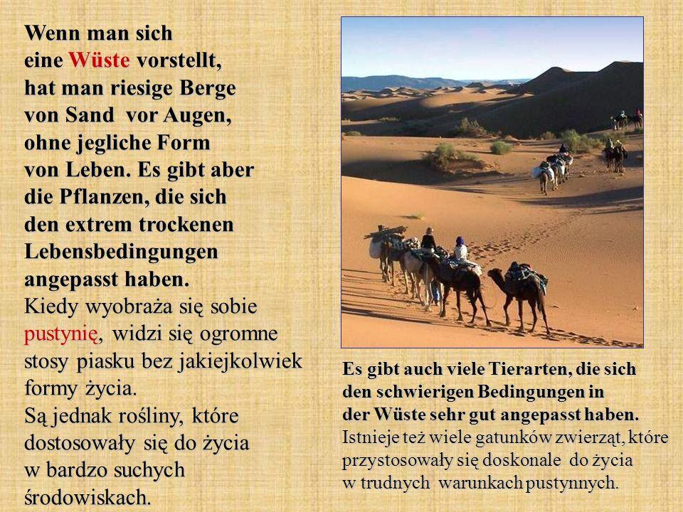 Wenn man sich eine Wüste vorstellt, hat man riesige Berge von Sand vor Augen, ohne jegliche Form von Leben. Es gibt aber die Pflanzen, die sich den ex
