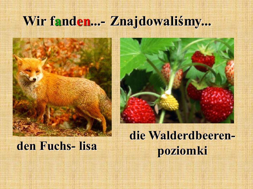 Wir fanden...- Znajdowaliśmy... den Fuchs- lisa die Walderdbeeren- poziomki