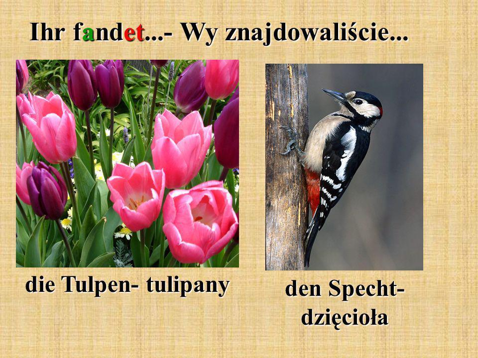 Ihr fandet...- Wy znajdowaliście... die Tulpen- tulipany den Specht- dzięcioła