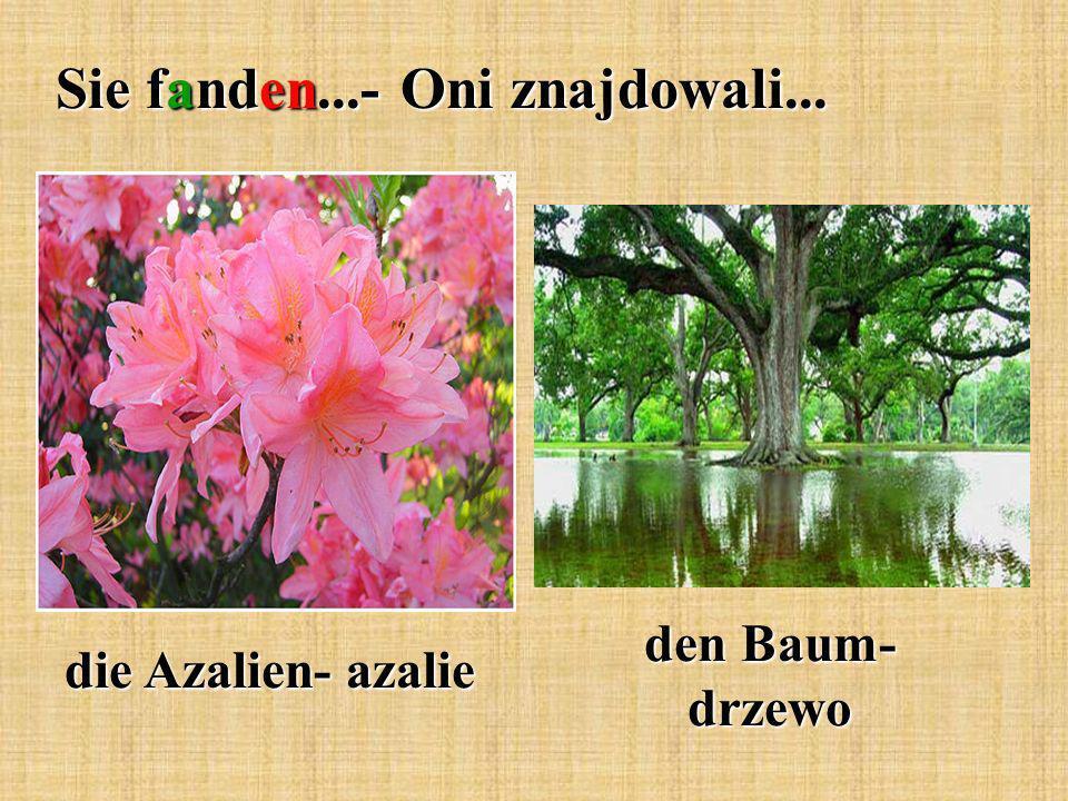 Sie fanden...- Oni znajdowali... die Azalien- azalie den Baum- drzewo