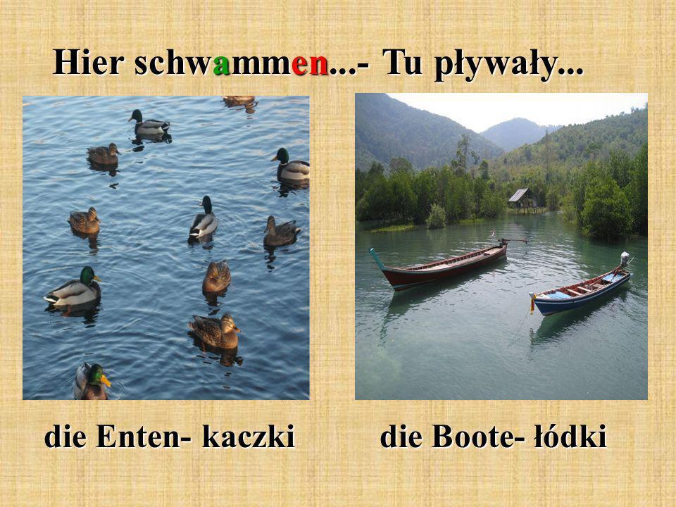 Hier schwammen...- Tu pływały... die Enten- kaczki die Boote- łódki