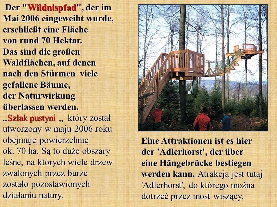 Eine Attraktionen ist es hier der 'Adlerhorst', der über eine Hängebrücke bestiegen werden kann. Atrakcją jest tutaj 'Adlerhorst', do którego można do