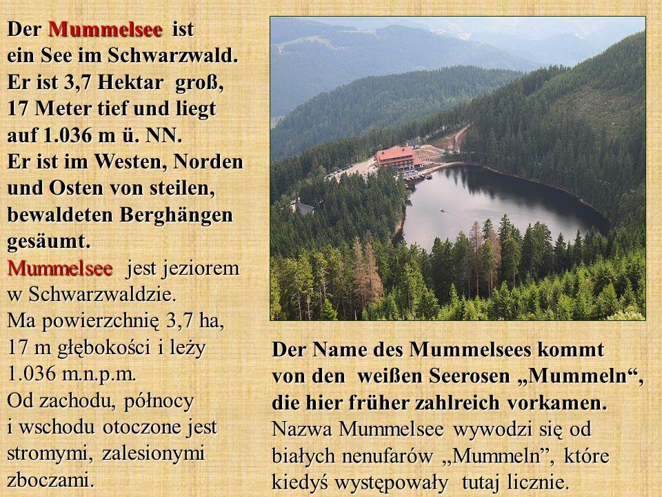 Der Name des Mummelsees kommt von den weißen Seerosen Mummeln, die hier früher zahlreich vorkamen. Nazwa Mummelsee wywodzi się od białych nenufarów Mu
