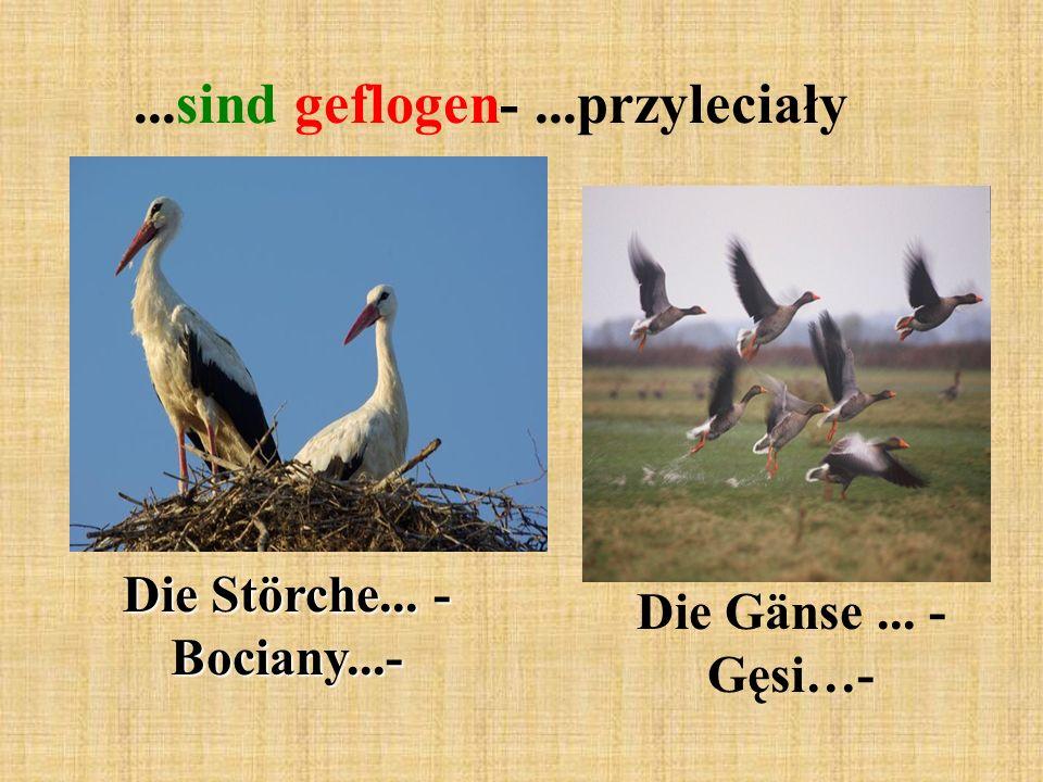 ...sind geflogen-...przyleciały Die Störche... - Bociany...- Die Gänse... - Gęsi…-