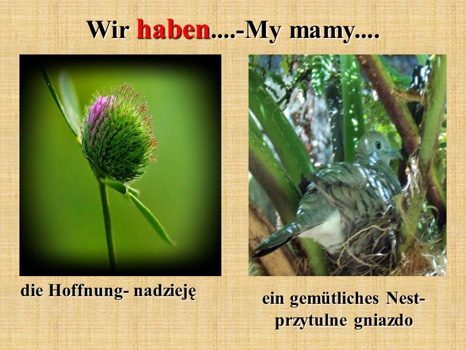 Wir haben....-My mamy.... die Hoffnung- nadzieję ein gemütliches Nest- przytulne gniazdo