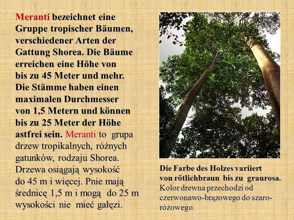 Meranti bezeichnet eine Gruppe tropischer Bäumen, verschiedener Arten der Gattung Shorea.