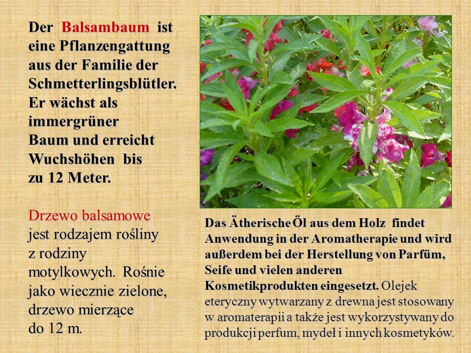 Der Balsambaum ist eine Pflanzengattung aus der Familie der Schmetterlingsblütler.
