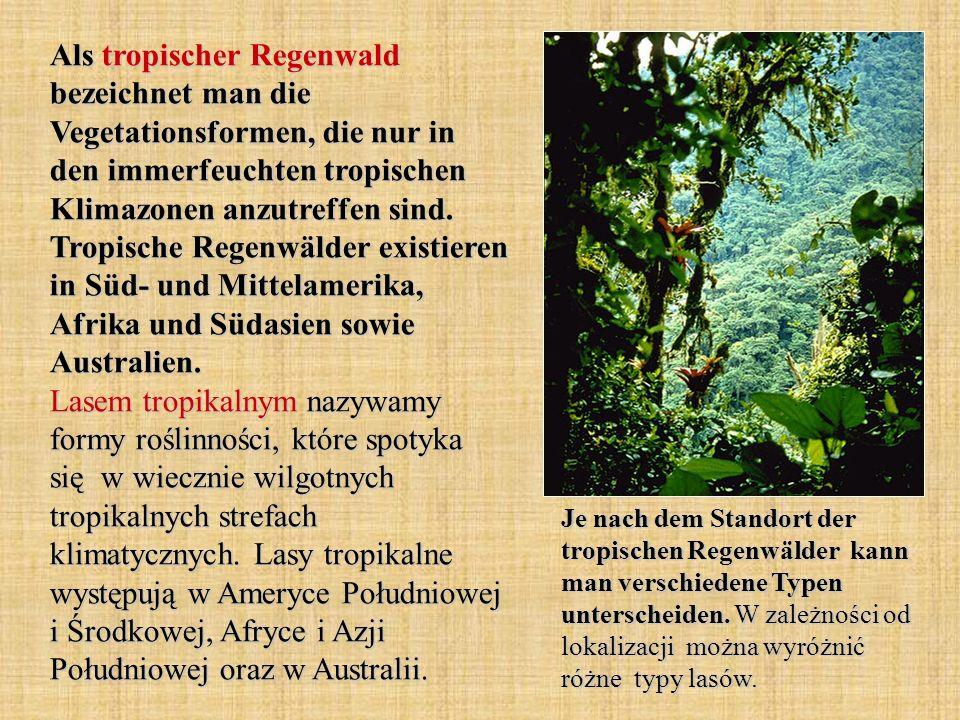 Als tropischer Regenwald bezeichnet man die Vegetationsformen, die nur in den immerfeuchten tropischen Klimazonen anzutreffen sind.