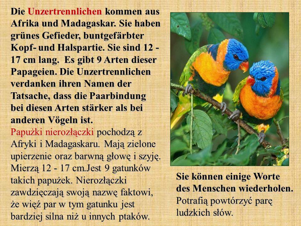 Die Unzertrennlichen kommen aus Afrika und Madagaskar. Sie haben grünes Gefieder, buntgefärbter Kopf- und Halspartie. Sie sind 12 - 17 cm lang. Es gib