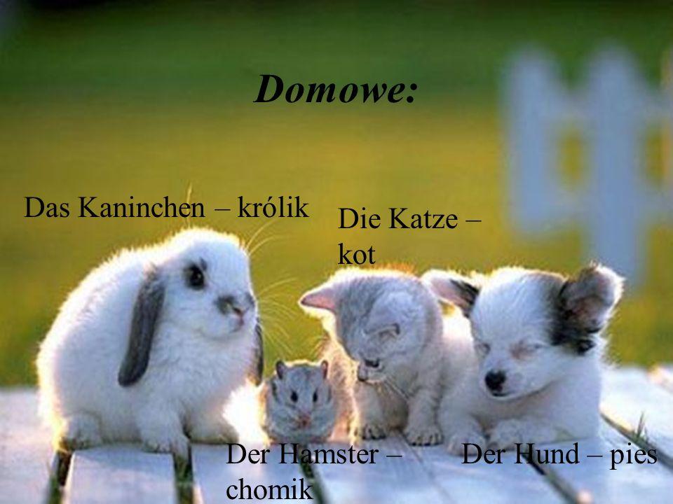 Domowe: Der Hund – pies Die Katze – kot Der Hamster – chomik Das Kaninchen – królik