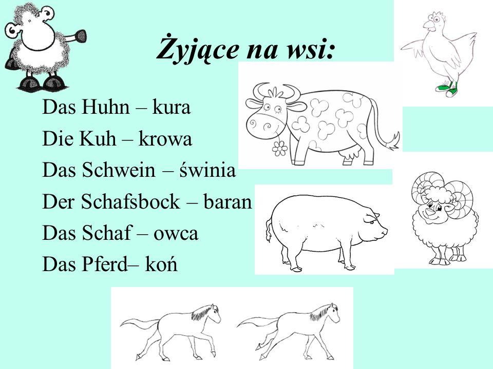 Żyjące na wsi: Das Huhn – kura Die Kuh – krowa Das Schwein – świnia Der Schafsbock – baran Das Schaf – owca Das Pferd– koń