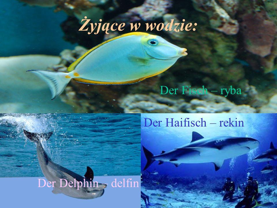 Żyjące w wodzie: Der Fisch – ryba Der Delphin – delfin Der Haifisch – rekin