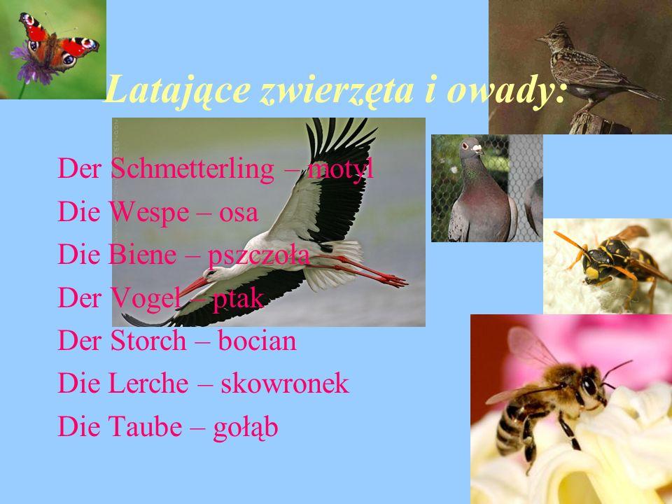Latające zwierzęta i owady: Der Schmetterling – motyl Die Wespe – osa Die Biene – pszczoła Der Vogel – ptak Der Storch – bocian Die Lerche – skowronek