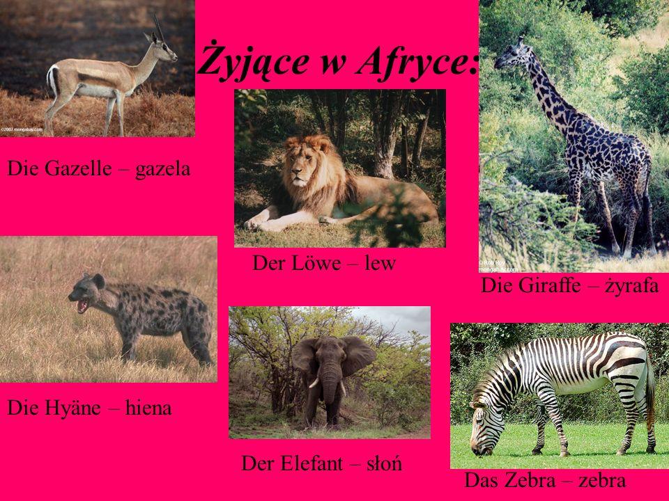 Żyjące w Afryce: Das Zebra – zebra Die Giraffe – żyrafa Der Löwe – lew Die Hyäne – hiena Die Gazelle – gazela Der Elefant – słoń