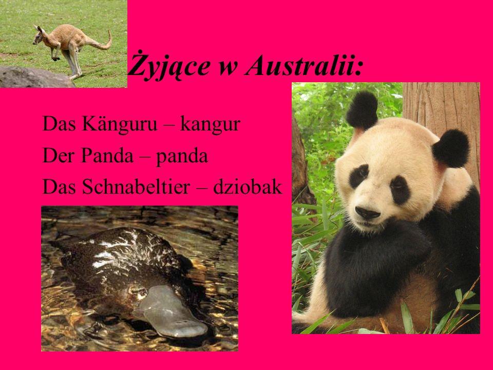 Żyjące w Australii: Das Känguru – kangur Der Panda – panda Das Schnabeltier – dziobak