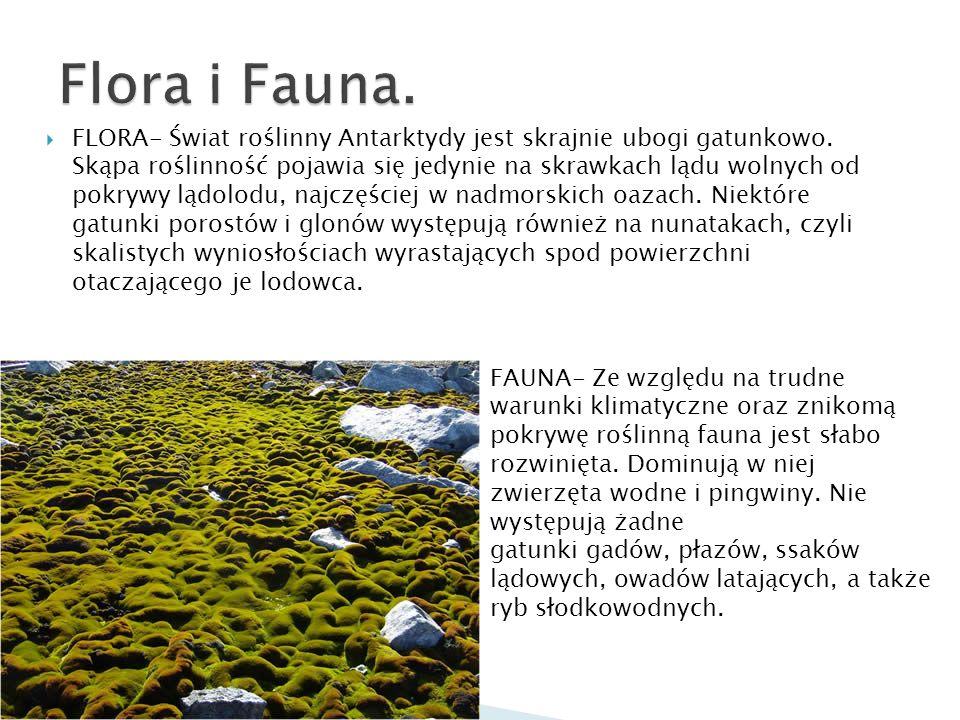 FLORA- Świat roślinny Antarktydy jest skrajnie ubogi gatunkowo. Skąpa roślinność pojawia się jedynie na skrawkach lądu wolnych od pokrywy lądolodu, na