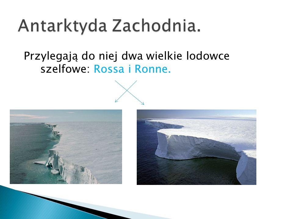 Przylegają do niej dwa wielkie lodowce szelfowe: Rossa i Ronne.