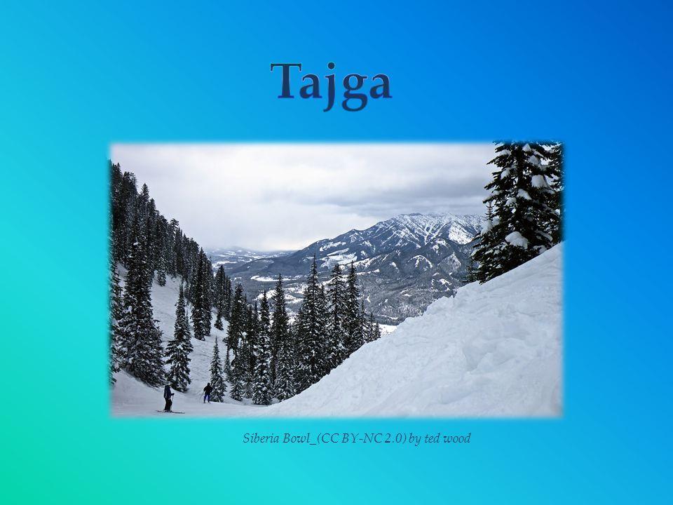 Taiga _(CC BY-SA 3.0) by Joonasl