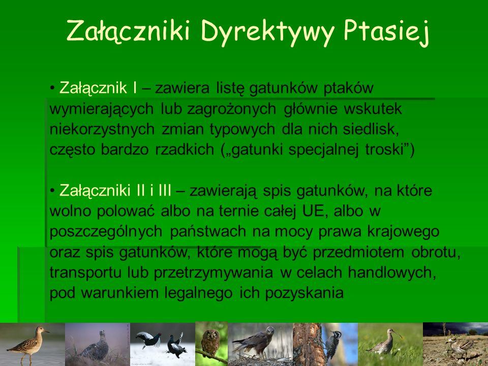 Załączniki Dyrektywy Ptasiej Załącznik I – zawiera listę gatunków ptaków wymierających lub zagrożonych głównie wskutek niekorzystnych zmian typowych d