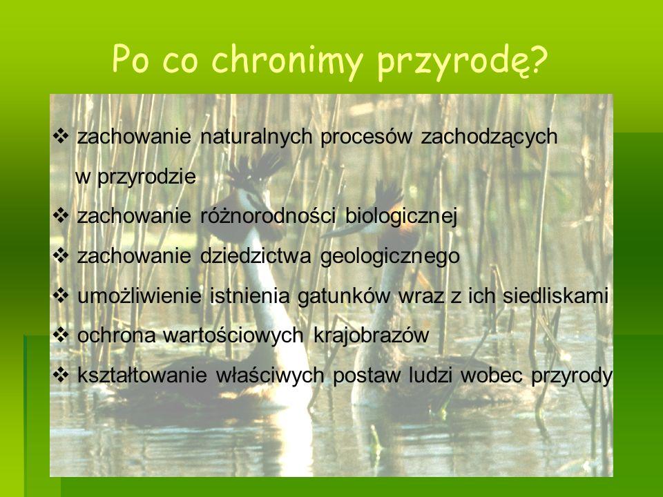Regulacje prawne dotyczące ochrony przyrody w Polsce - Konstytucja Rzeczpospolitej Polskiej - Ustawa o Ochronie Przyrody - Ustawa o Ochronie i Kształtowaniu Środowiska - Ustawa o hodowli, ochronie zwierząt łownych i prawie łowieckim
