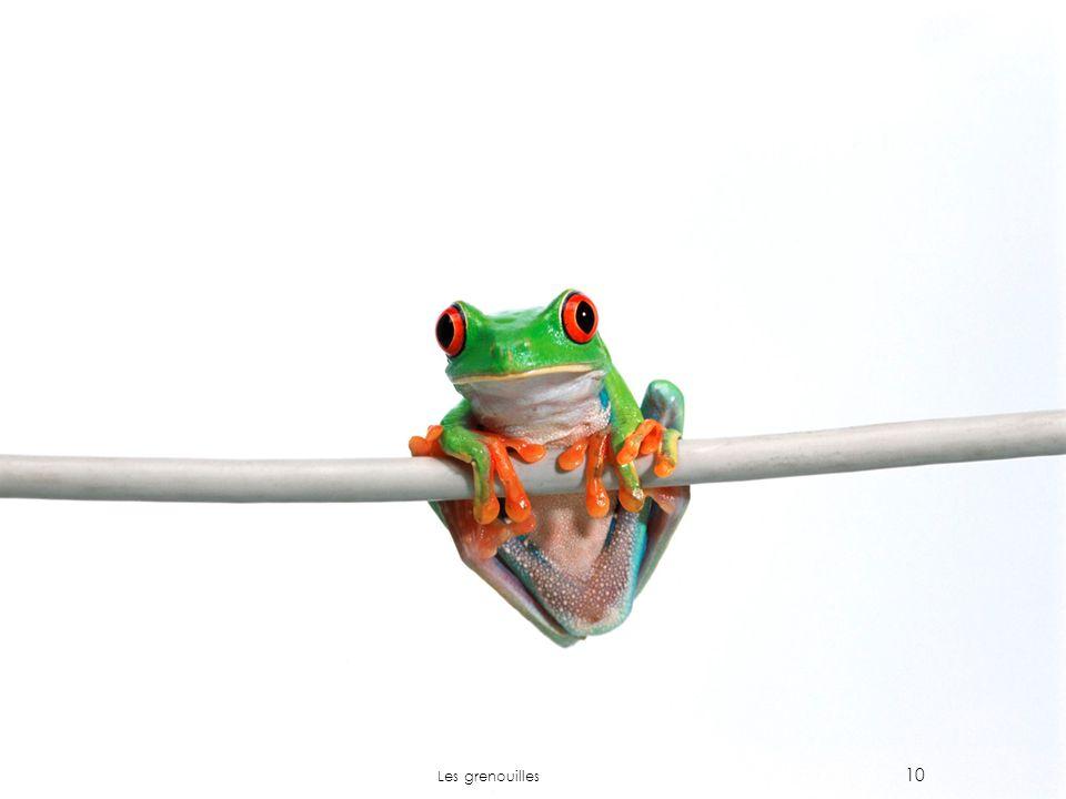 10 Les grenouilles