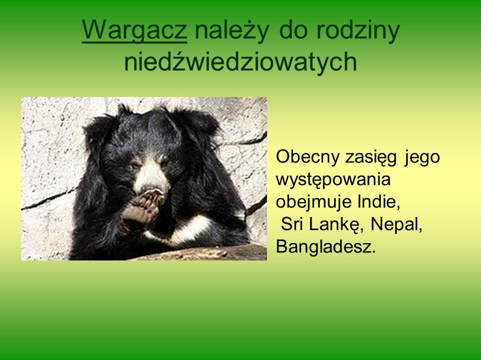 Wargacz należy do rodziny niedźwiedziowatych Obecny zasięg jego występowania obejmuje Indie, Sri Lankę, Nepal, Bangladesz.