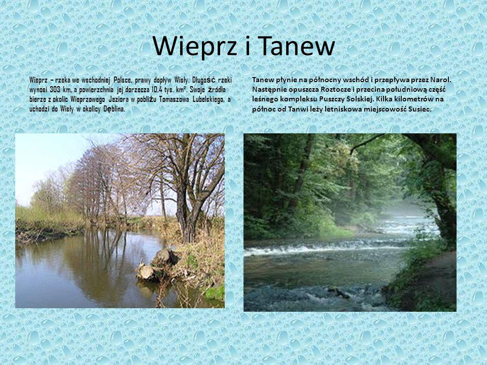 Wieprz i Tanew Wieprz – rzeka we wschodniej Polsce, prawy dopływ Wisły. Długo ść rzeki wynosi 303 km, a powierzchnia jej dorzecza 10,4 tys. km². Swoje