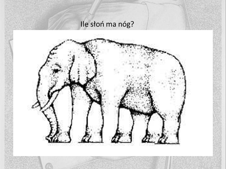 Ile słoń ma nóg?