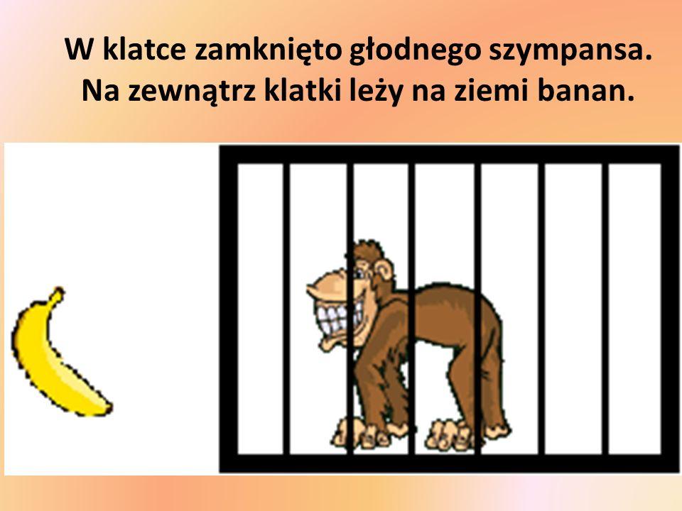W klatce zamknięto głodnego szympansa. Na zewnątrz klatki leży na ziemi banan.