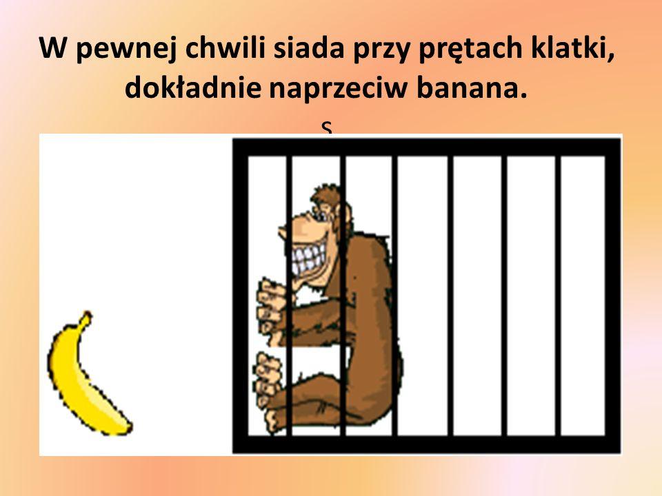 W pewnej chwili siada przy prętach klatki, dokładnie naprzeciw banana. s