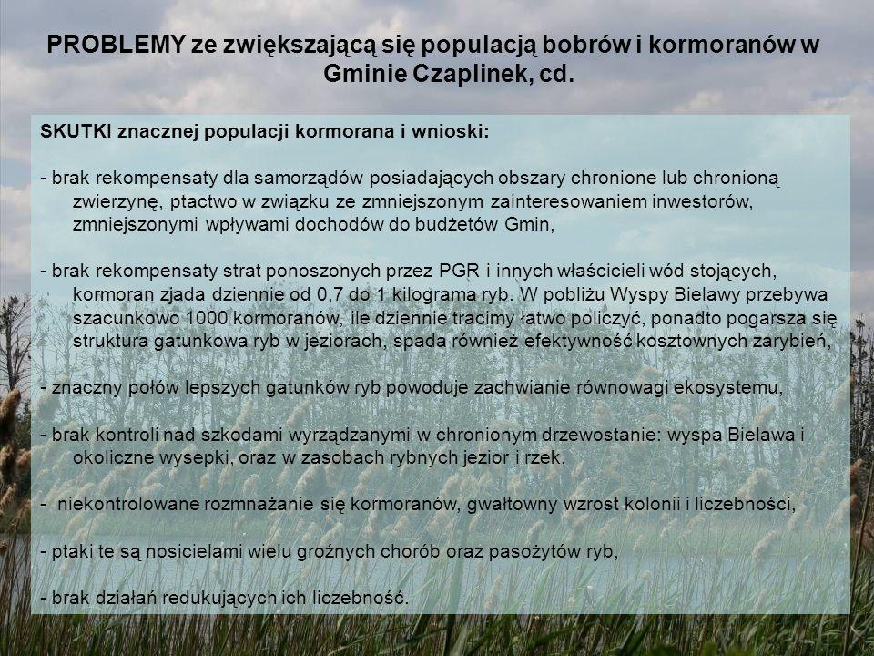 PROBLEMY ze zwiększającą się populacją bobrów i kormoranów w Gminie Czaplinek, cd. SKUTKI znacznej populacji kormorana i wnioski: - brak rekompensaty